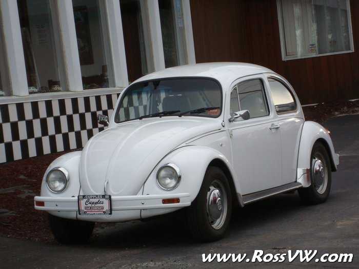mexican beetle rossvwcom